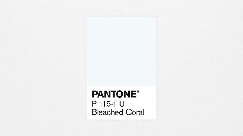 tsvet-2020-goda-pantone-bleached-coral